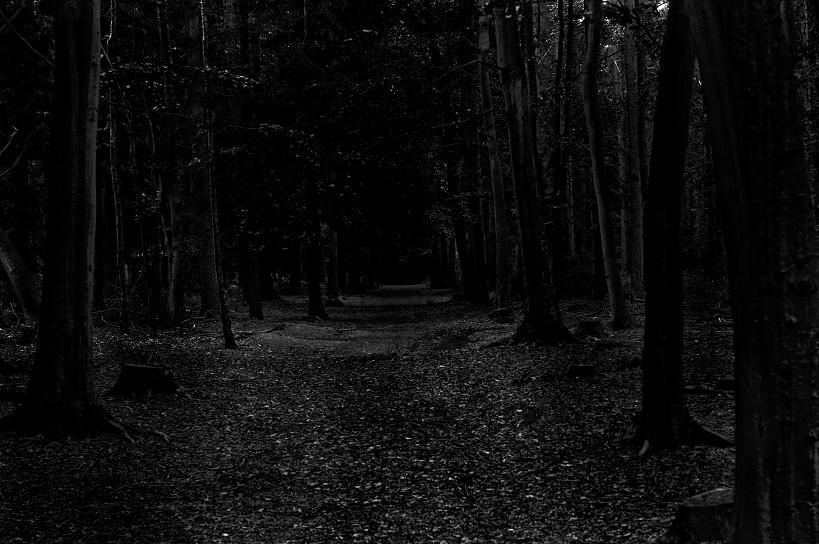 lwsm_dark-path_1994-test_159